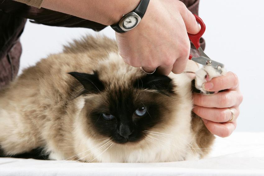 cortes de pelo felinos