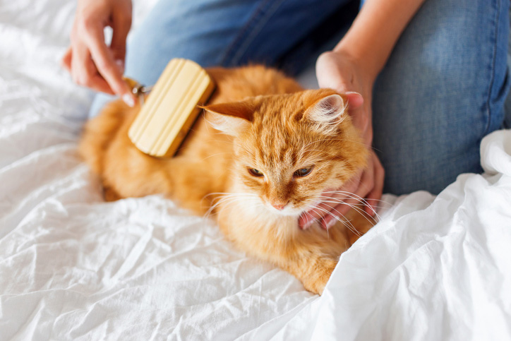 ideas de cortes de pelo felinos